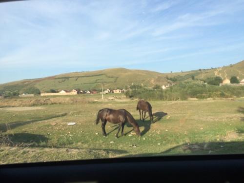 Lösa hästar i Rumänien